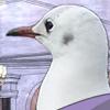 gull1