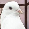 sakuya3